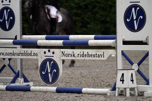 norsk-varmblod31